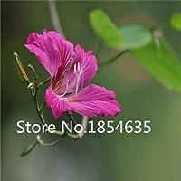 パープル:プロモーション!100レッドバッド種子9異なる色花の種高品質diyガレン多年生咲く植物花