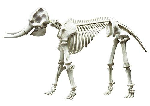 ポーズスケルトン哺乳類 ゾウ