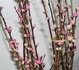 花桃 桃の花 1mx2把 ひなまつり お部屋の春らしさアップに 生け花 フラワーアレンジメント