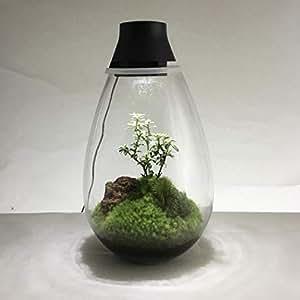 Mosslight-モスライト LED照明付苔テラリウム 日本製/Moss Terrarium with LED lighting / UNC17001BK(ブラック)(容器のみで植物は含まれません) (This doesn't contain plants,stones,soil,etc.)