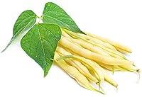 """Bean""""Furora Polana"""" - Delicious and Resistant to Diseases -"""