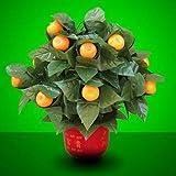J-STAGE The Orange Tree Illusion (15 Oranges) オレンジツリーイリュージョン マジック 手品
