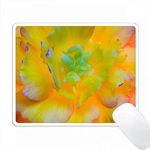 アメリカ、ワシントン、シーベック。バックライト、光るベゴニアの花。 PC Mouse Pad パソコン マウスパッド