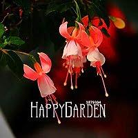 ベストセラー!多色ピンクの二重花びらフクシアの種鉢植えの花の種植物吊りフクシアの花50個/ロット、#H1F3Qb
