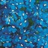 国華園 花たね ネメシア ブルー 1袋(50mg)【※発送が国華園からの場合のみ正規品です】