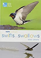 Swifts and Swallows (Rspb Spotlight)