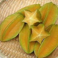沖縄県産フルーツ ゴレンシ(スターフルーツ)5パック(300g~450g2~6個入り)約1.5~2㎏