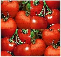 (150)ルトガートマト種子 - 家宝 - 別名Jereyトマト