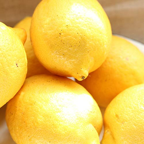 レモン 1kg サイズ混合 露地 家庭用 愛媛県産 産地直送