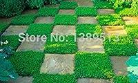PLAT企業:200 /袋種子、タイム、オン・ミーWkを、家の装飾のためにレモンの香り種子とても良いスマイル