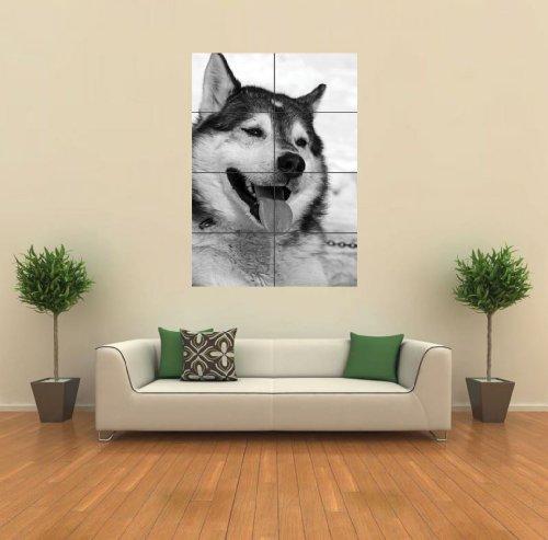 【動物】シベリアンハスキー アートプリントポスター  SIBERIAN HUSKY DOG G572