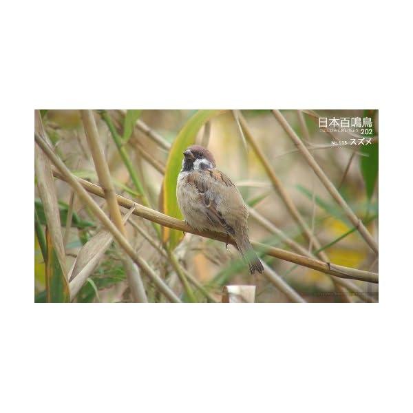 シンフォレストBlu-ray 日本百鳴鳥 2...の紹介画像22