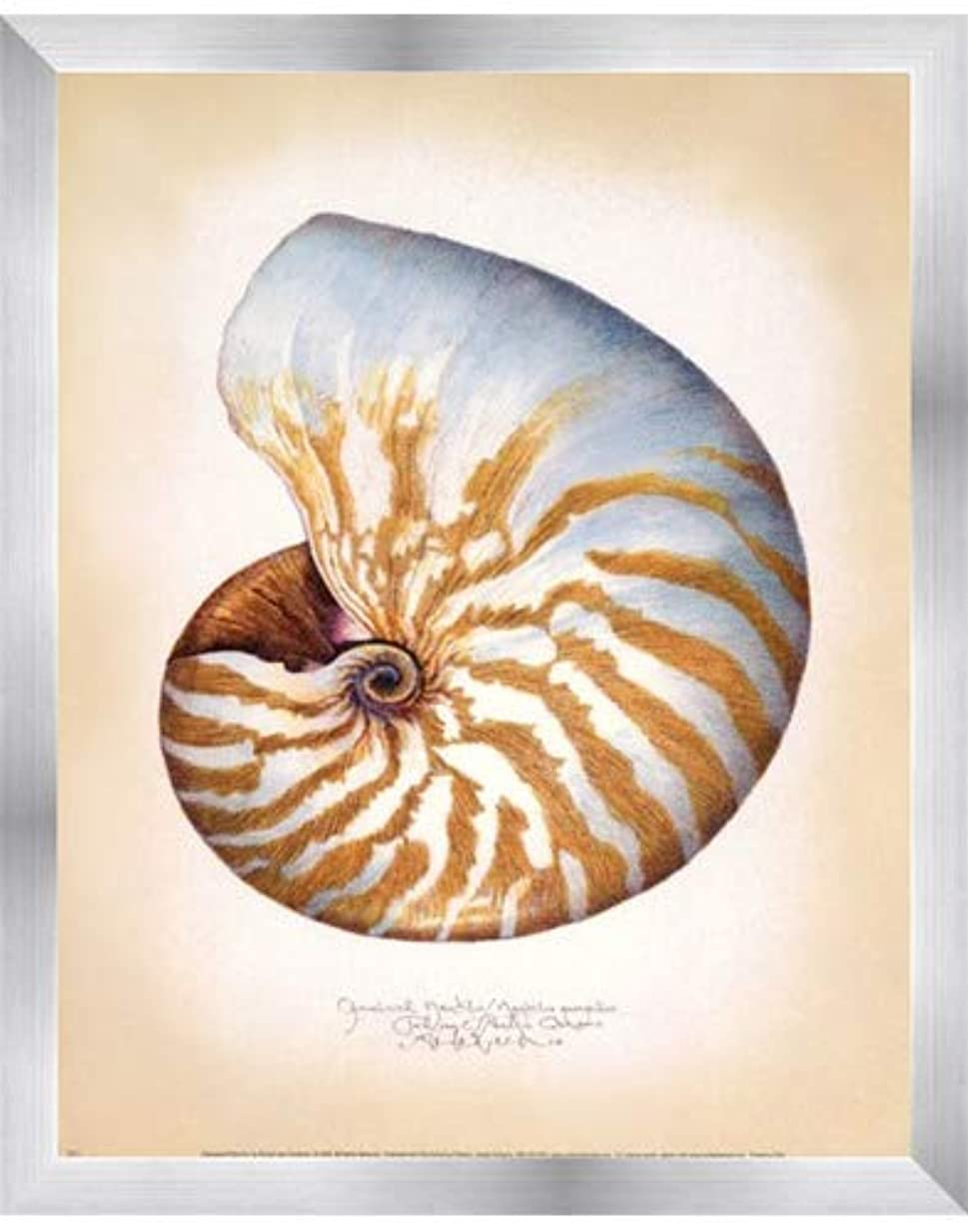 ところで起きる砂Chambered Nautilus by Richard Van Genderen – 11 x 14インチ – アートプリントポスター 11 x 14 Inch LE_646861-F9935-11x14