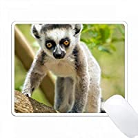 赤ちゃんのテディベアのキツネ、Anjaプライベートコミュニティリザーブ、マダガスカル。 PC Mouse Pad パソコン マウスパッド