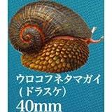 ネイチャーテクニカラーMONO PLUS 深海生物 ボールチェーン&マグネット2 [7.ウロコフネタマガイ(ドラスケ): ボールチェーン](単品)