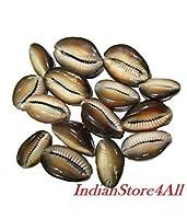 IndianStore4All Set Of 11 Rare Brown Kauri/Kaudi/Kawdi/Shell Goddess Lakshmi Blessing Puja [並行輸入品]