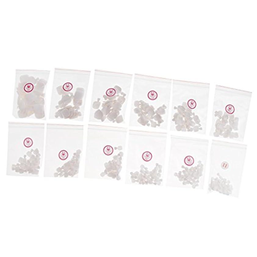 信頼性のある剥ぎ取る聖なるFenteer 約504個 ネイルチップ 人工爪 ヒント  ネイルアート トレーニング プラスチック製 マニキュアデザイン 3色選べる - 白