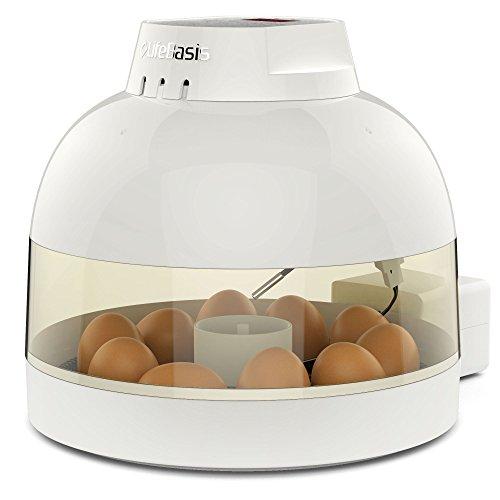 スーパーのうずらの卵を孵化させよう!|孵化させるポイント5つ