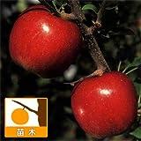 【ノーブランド品】リンゴ:シナノスイート4号ポット[苗木]
