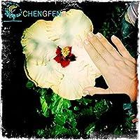 アーミーグリーン:100種屋内ミックスカラーシードDIYの家の庭鉢植えや庭の種鉢植え