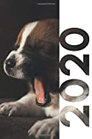 2020: Gifts from dog to mom convenient Planner Calendar Organizer Daily Weekly Monthly Student Diary for researching how to become a canine hydrotherapist