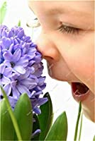 フォーエバー屋外不足している100個/袋カラフルな種子盆栽美しい種子(未電球)水耕ので香り
