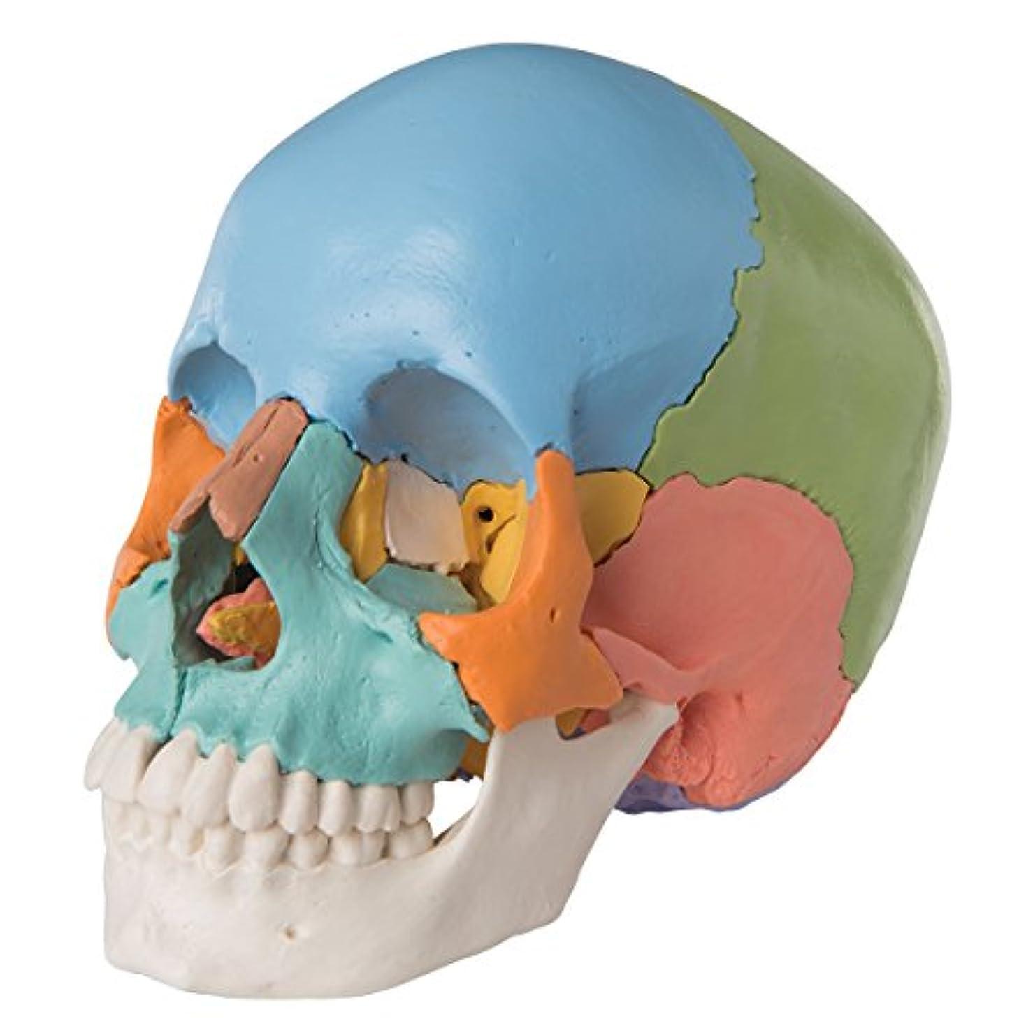 浜辺神秘性的頭蓋骨22分解キット,マルチカラー仕様