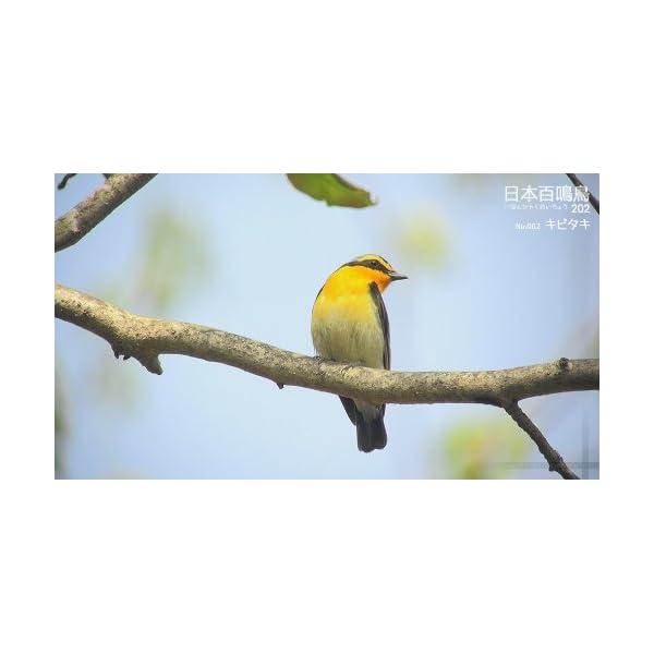 シンフォレストBlu-ray 日本百鳴鳥 2...の紹介画像15
