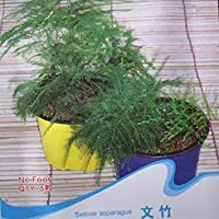 Zoomyファー:10seeds /バッグアスパラ屋内鉢植えの種花の種