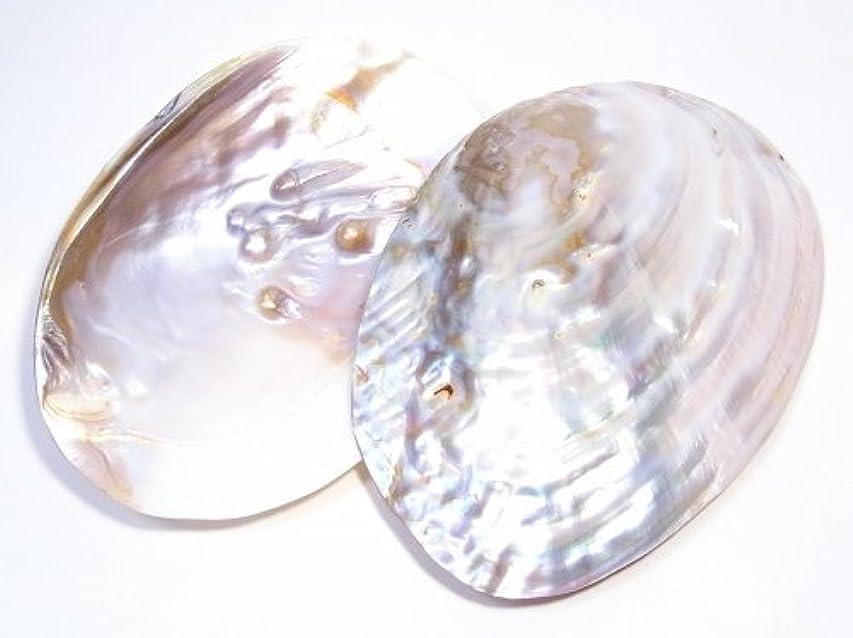 《Sサイズ》 パールシェル(真珠貝) 【AAAランク】 浄化?ホワイトセージ用