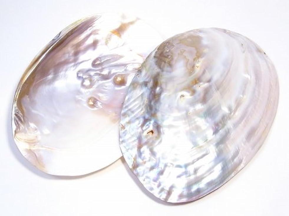 なんでもピニオンうまくやる()自由が丘AMERI パールシェル 貝殻(真珠貝) 【AAAランク】 ホワイトセージ用