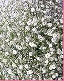 プリティマーメイド 生花 切花 切り花 かすみ草1000円分 添え花 フラワー、同梱用