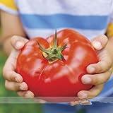 ビッグビーフ混合トマトの種、プロの包装、20 /パッケージ、大、エクストラ - 肉、ワーカートマト