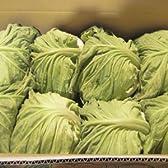 大阪府産 キャベツ 6~8玉 (野菜)