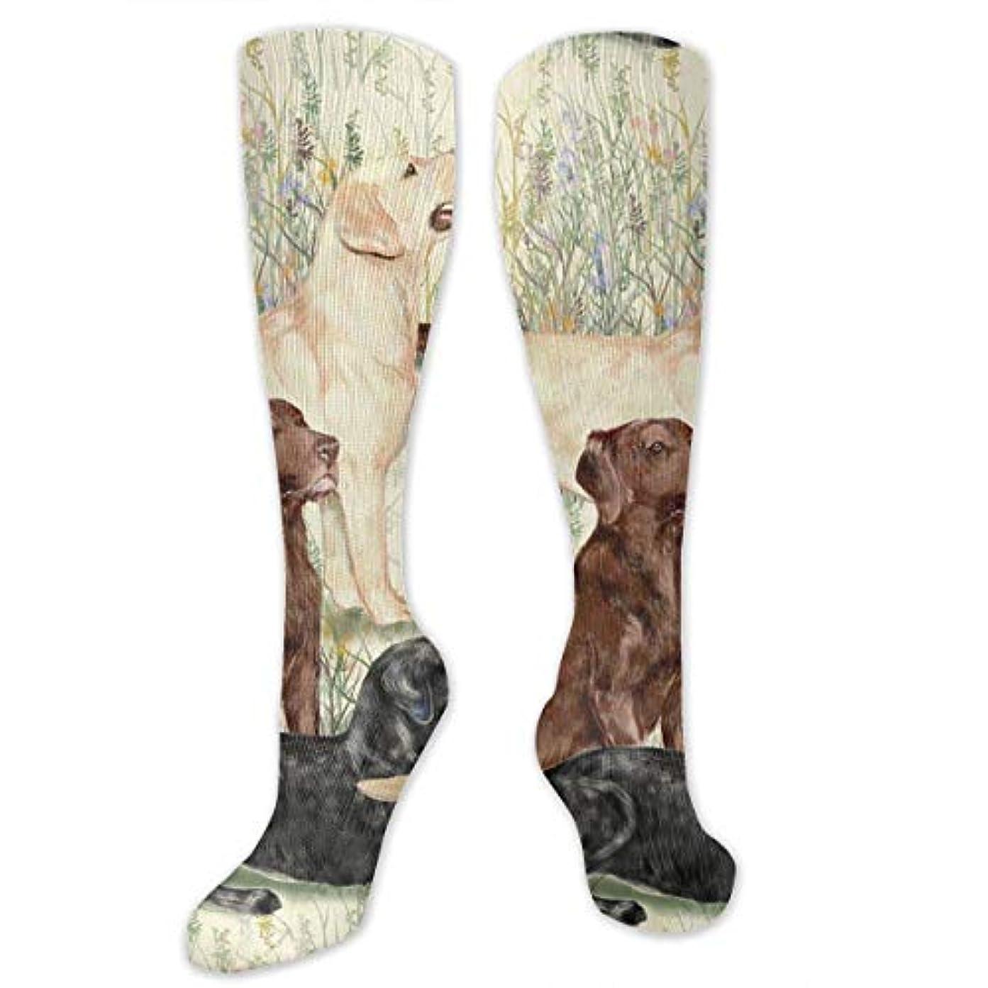 強いますそれから靴下,ストッキング,野生のジョーカー,実際,秋の本質,冬必須,サマーウェア&RBXAA Landscape Cute Dog Socks Women's Winter Cotton Long Tube Socks Cotton...