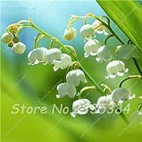 11:バレーConvallaria Majalis多年生の花の種、プロフェッショナルパック、50種子/パック、非常に美しいの珍しいカラフルなユリ