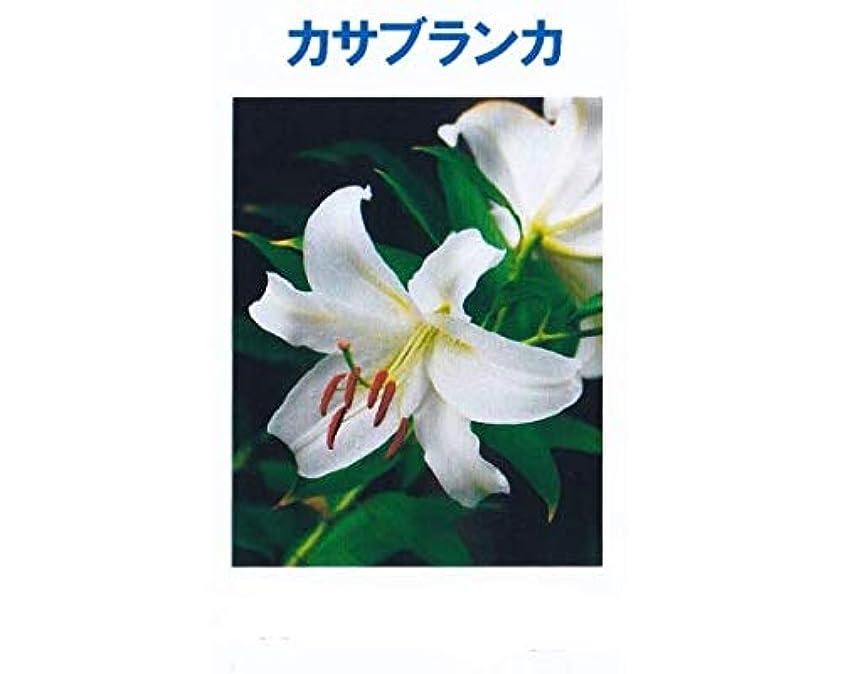 トロイの木馬奇跡的な魅力的アロマオイル カサブランカ 5ml エッセンシャルオイル 100%天然成分