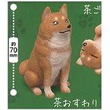 むにゃむにゃ柴犬 [1.茶おすわり](単品)