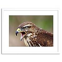 Photo Buzzard Bird Prey Beak Hawk Framed Wall Art Print