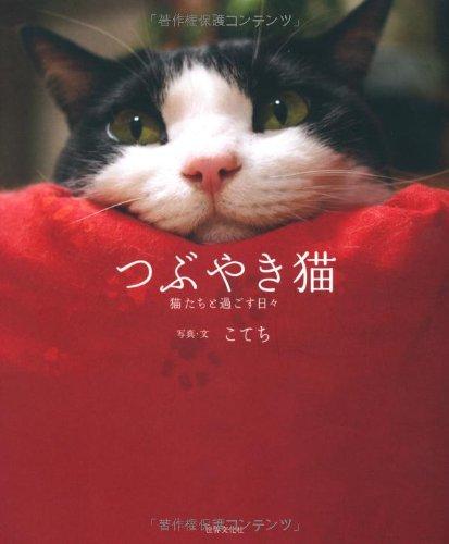 つぶやき猫 猫たちと過ごす日々