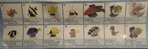 ユージン 原色図鑑シリーズ10 原色海水魚図鑑1 ハリセンボン