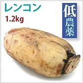 茨城産低農薬栽培れんこん 1.2kg
