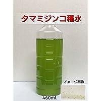 (生餌)タマミジンコ 種水 (460ml)