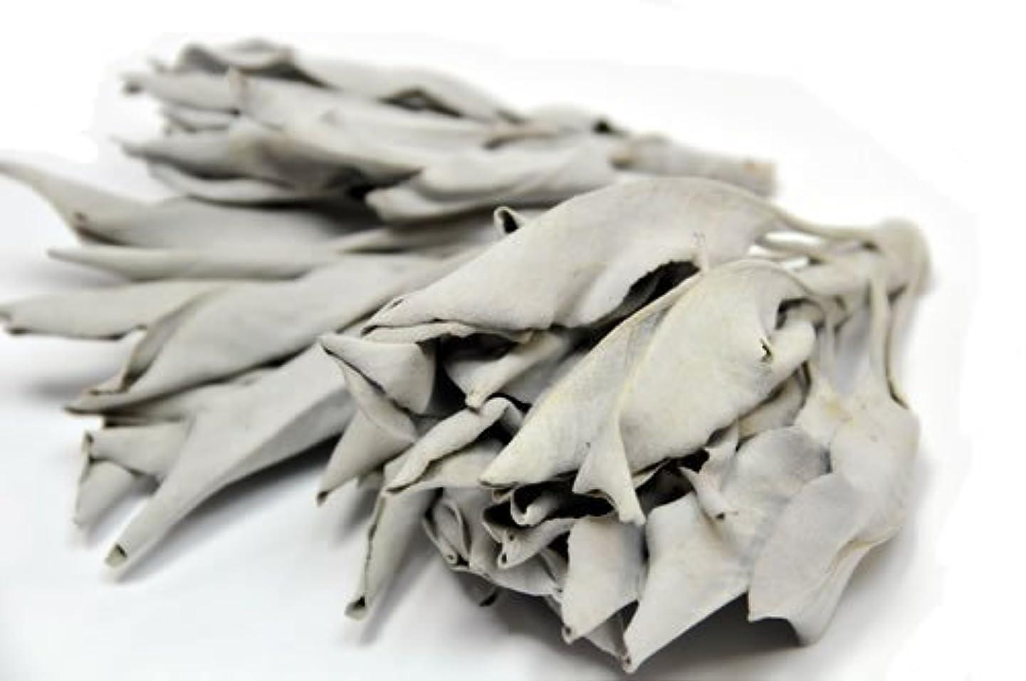 移動する出血黒人ハーブ工房HCC ホワイトセージ100g プロ用 浄化上質クラスター(葉+枝付) カリフォルニア産