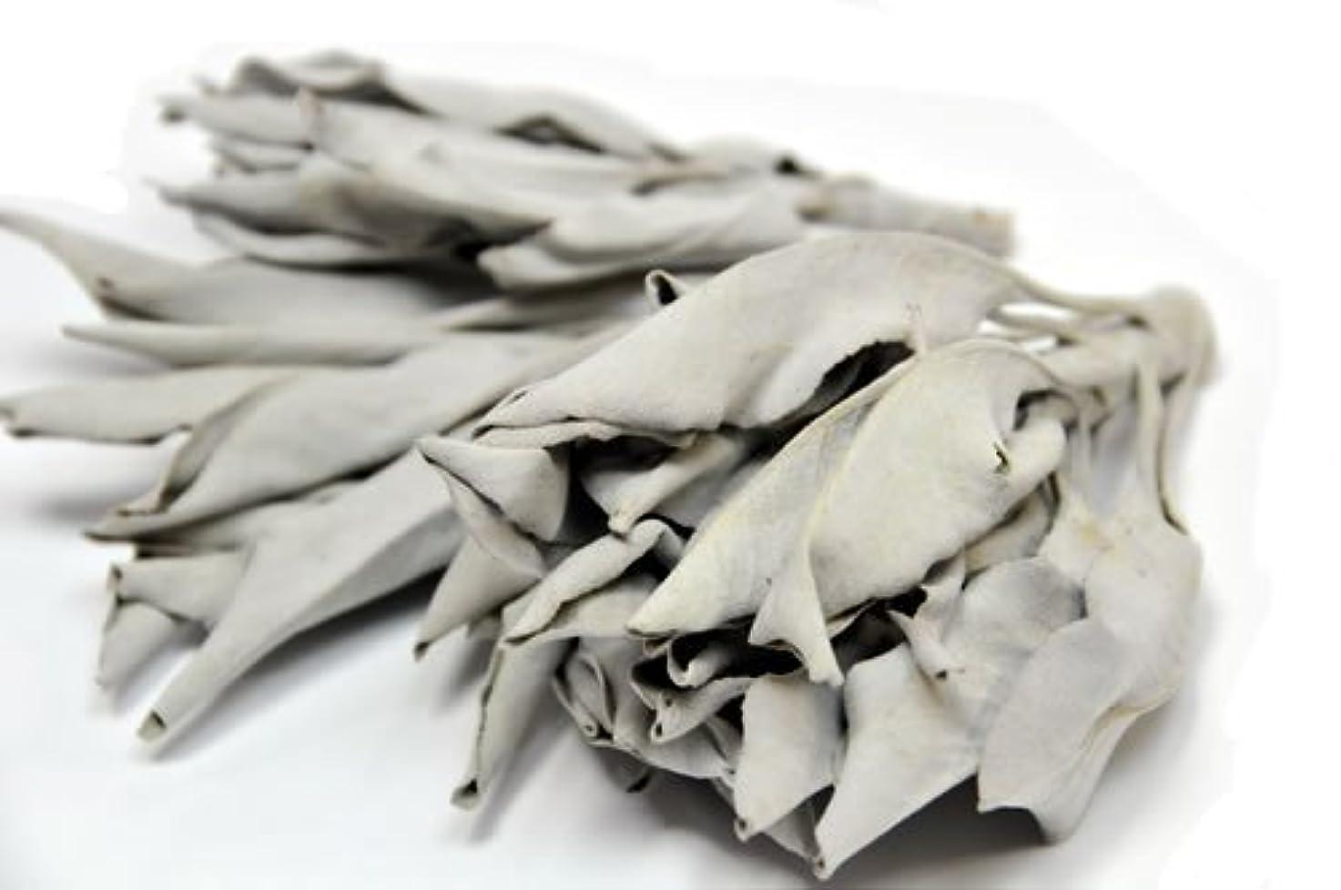 に対処する快適れんがハーブ工房HCC ホワイトセージ100g プロ用 浄化上質クラスター(葉+枝付) カリフォルニア産
