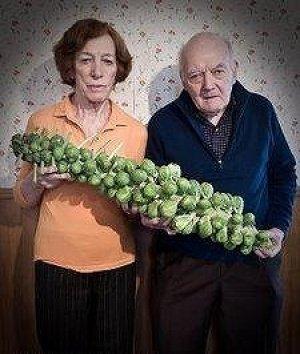 1株に約90個収穫できるアイスランド子持ちキャベツ 40粒