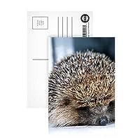 HodgeHeg the Hedgehog - ポストカード(8枚組) - 6 x 4インチ - Art247スタンダードサイズ - 8枚組