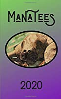 Manatees 2020: Face to Face with Animals Monthly Pocket Calendar Manatee Gifts for Women Men Kids