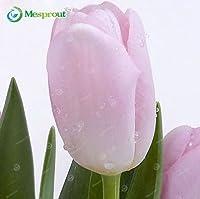 22:新着!24色香水チューリップ種子高級花盆栽種子、最も美しいとカラフルなチューリップ植物多年生ホーム
