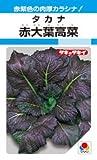 赤大葉高菜